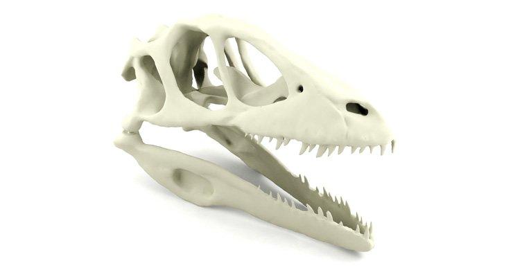 dinosauruksen-kallo